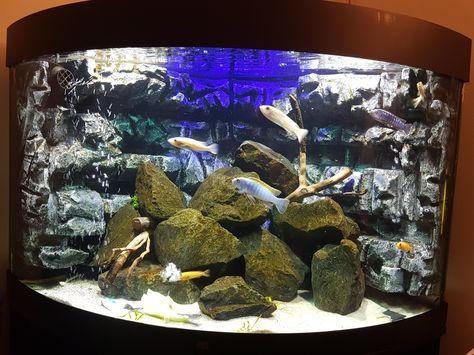Mein Aquarium, Malawi Becken, Basaltsteine, Rückwand selber gebaut - deko fur aquarium selber machen