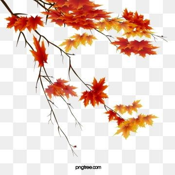 Autumn Leaves Beautiful Maple Leaf Png And Psd Leaf Drawing Maple Leaf Drawing Leaf Clipart