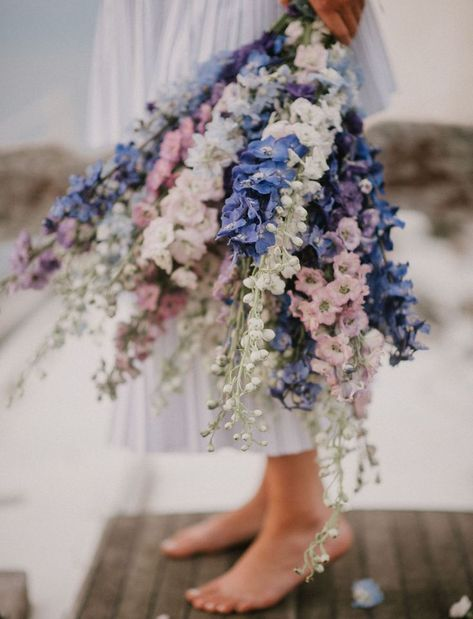 Wild delphiniums have a watercolor effect thanks to their many tints and shades