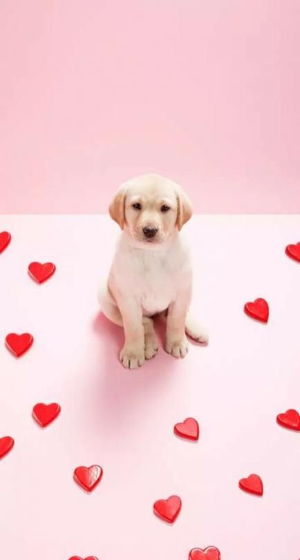 Dogs Wallpaper Iphone Backgrounds Puppys 31 Ideas Dog Wallpaper Iphone Puppy Wallpaper Iphone Cute Puppy Wallpaper