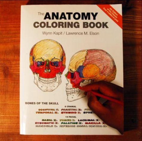 Anatomy Coloring Book Wynn Kapit Download | Pusat Hobi