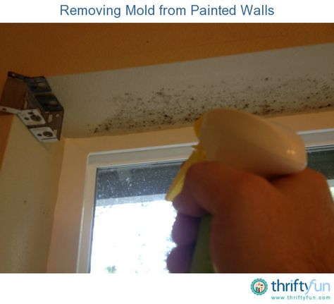 This is a guide about removing mold from painted walls. Bathrooms and other humid areas can begin to grow mold on the walls and ceilings.
