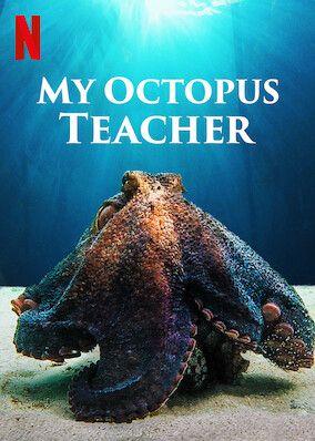 My Octopus Teacher on Netflix