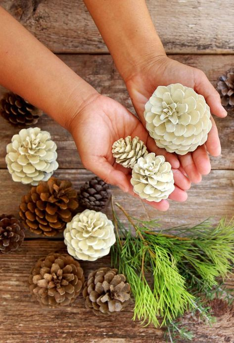 Make beautiful bleached pinecones in 5 minutes without bleach! Non-toxic & easy DIY pine cone craft, perfect for fall, winter, Thanksgiving & Christmas decorations! - A Piece of Rainbow #pinecones #pineconecrafts #diy #homedecor home decor ideas, #diyhomedecor #thanksgiving #christmas #christmasdecor christmas craft,s #christmasideas christmas decorations, #crafts #fall #winter #farmhouse #vintage #farmhousestyle farmhouse decor, wedding decor, #pinecones pinecone crafts, fall, winte