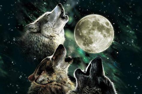 Three Wolf Moon Macbook Air Pre 2018 13 Inch Skin In 2019