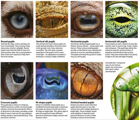 30 Of The Top Infographics From R Coolguides For You To Favorget Types Of Animals Animals Nature Images
