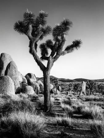 USA, California, Joshua Tree National Park at Hidden Valley Photographic Print by Ann Collins at Art.com