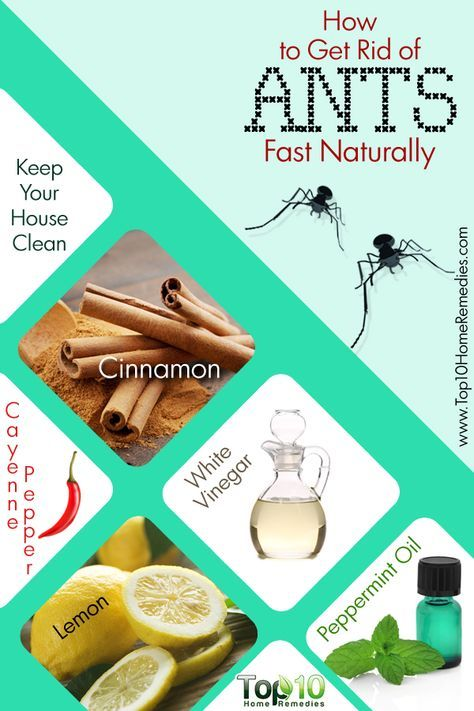 How To Get Rid Of Ants Fast And Naturally Rid Of Ants Get Rid