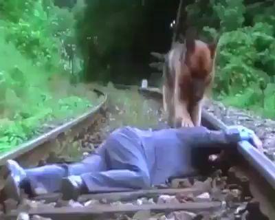 Köpek, zekasıyla ve sevgisiyle bakın sahibini ölümden nasıl kurtarıyor...