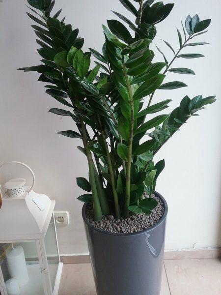 Kwiaty Doniczkowe I Artykuly Dekoracyjne Kwiaciarnia Margaretka Plant Leaves Flowers Cactus Plants