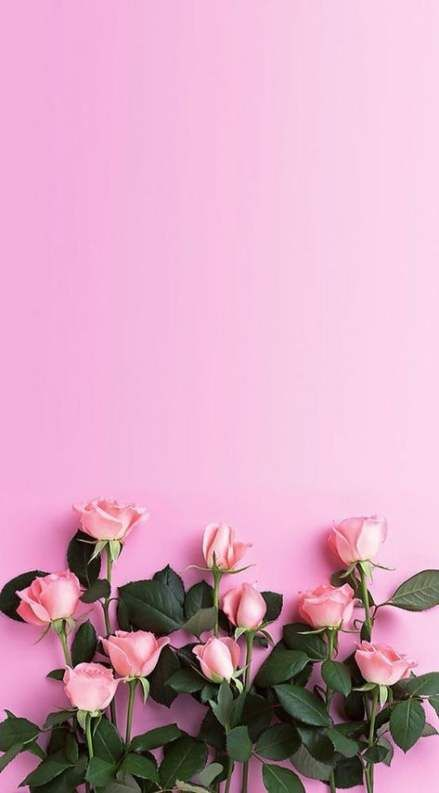 Flowers Wallpaper Iphone Tumblr Pink Roses 37 New Ideas Pink Wallpaper Iphone Flower Wallpaper Flower Backgrounds
