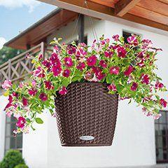 Sparen Sie Platz Mit Dem Hangenden Blumenkasten Super Schonen