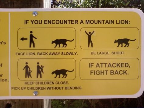 Mountain Lions. Good to know.