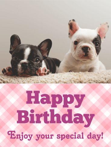 Adorable French Bulldog Birthday Card
