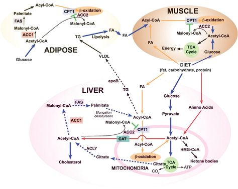 #ComplexCarbohydrates click for more info..