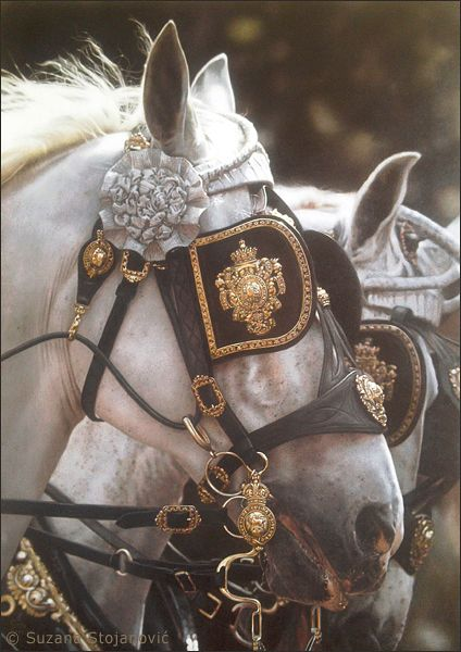 The most important role of equestrian clothing is for security Although horses can be trained they can be unforeseeable when provoked. Riders are susceptible while riding and handling horses, espec… Pretty Horses, Horse Love, Beautiful Horses, Foto Portrait, Captive Prince, Princess Aesthetic, Clydesdale, Draft Horses, Horse Tack