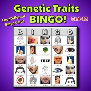 A fun way to introduce genetics to your student. Get them to examine their own genetic traits in this engaging genetic traits BINGO game. A sure-fire hit for your classroom.