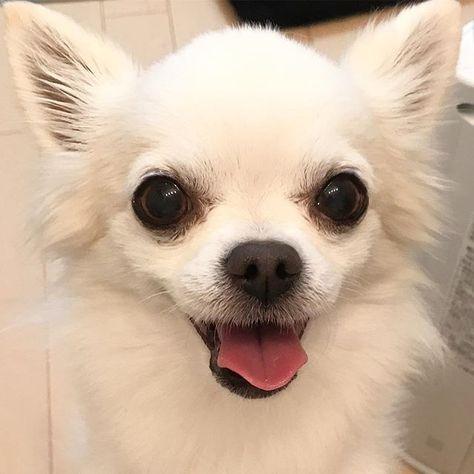 🐶スマイル犬😃 ティーちゃん とびっきりの笑顔 笑顔