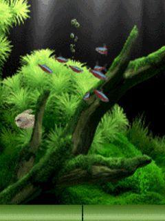 Download Wallpaper Keren Bergerak Untuk Hp Samsung  Aquarium di