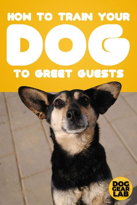 How To Train Your Dog To Greet Guests Perros Temas Y Arte