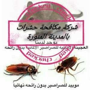 شركة مكافحة حشرات بالمدينة المنورة 0553885731 رش مبيدات بالمدينة المنورة