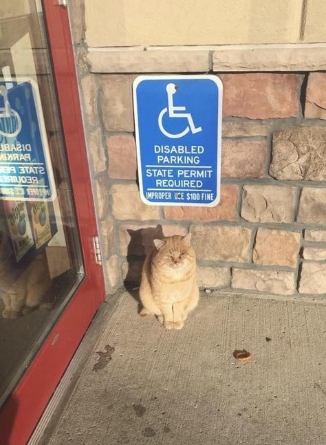A cat missing its left eye just chillin under the disabled parking sign outside ... -  A cat missing its left eye just chillin under the disabled parking sign outside … – A cat missi - #babygas #babygasbreastfed #babygascauses #babygasmassage #babygasrelief #babygasremedies #cat #chillin #disabled #Eye #helpbabywithgas #left #missing #outside #parking #sign #under #windybabygas