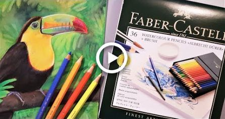 Faber Castell Albrecht Drer Watercolour Pencil Review Demo