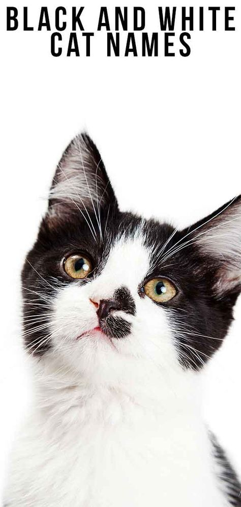 Black And White Cat Names 250 Cool Kitty Ideas In 2020 Cute Cat Names Black And White Kittens White And Black Cat