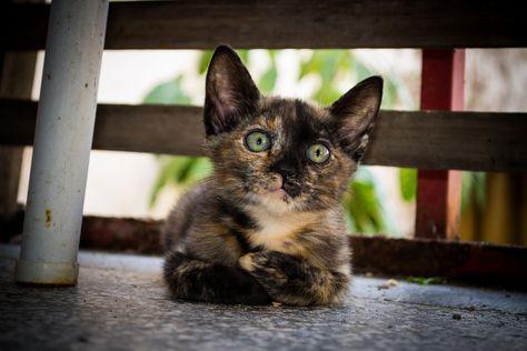 260 Ideas De Gatos Gatos Felinos Animales