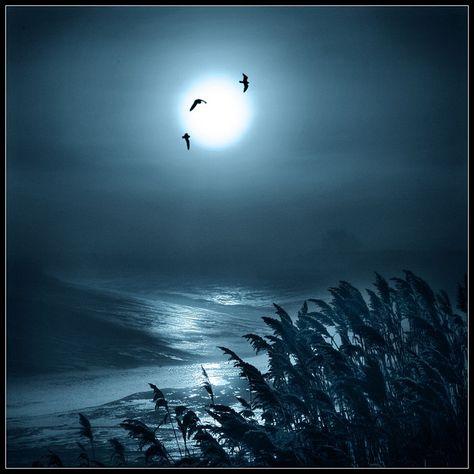 ✯ Lunar Light! .. by Adrians_art✯