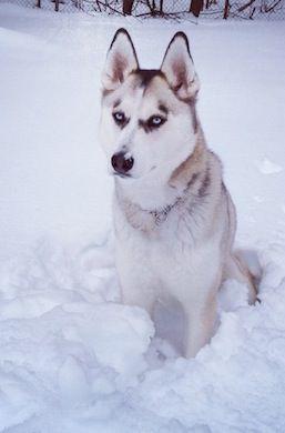My Dog Tessa True Lisa Nashua Nh 1 11 14 Cutest Dog Ever
