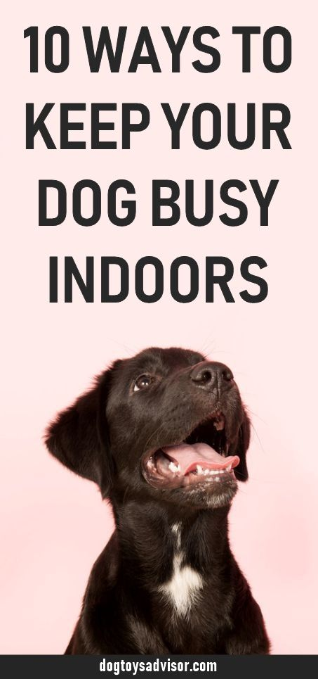 Here S 10 Simple Ways To Keep Your Dog Busy Indoors Our List