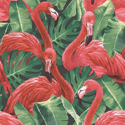 Galerie Wallcoverings Flamingos 32 8 L X 21 W Smooth Wallpaper Roll In 2021 Flamingo Wallpaper Pink Flamingo Wallpaper Tropical Wallpaper