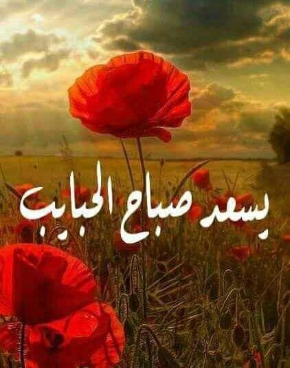 Pin By Hala Badr On صباح الخير Good Morning Good Morning Flowers Good Morning Beautiful Images Good Morning Greetings