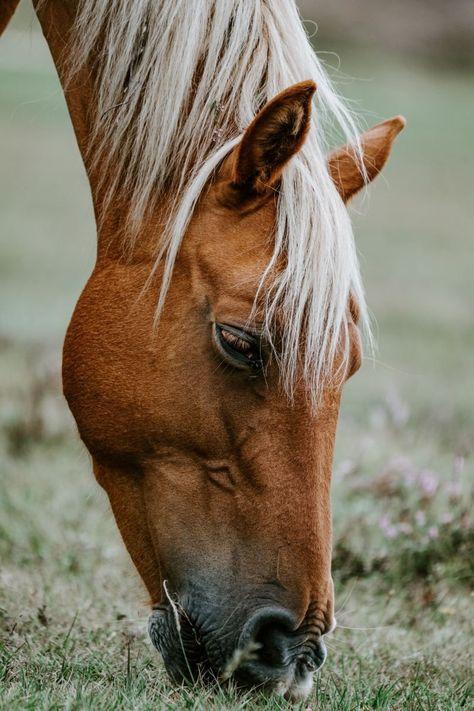 "Congress Passes Bill Defining Horses as Livestock. Congress clarifies that horses are not ""pets"" and advances landmark livestock health measures. Most Beautiful Horses, All The Pretty Horses, Free Horses, Wild Horses, Horse Photography, Wildlife Photography, Cavalo Wallpaper, Horse Wallpaper, Brown Horse"