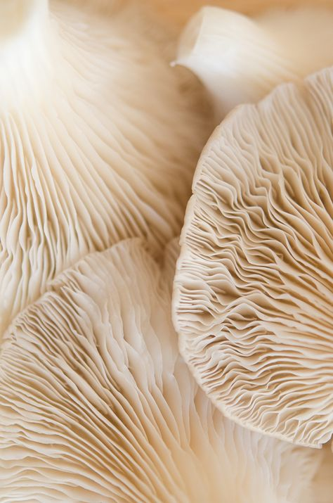 Art in Nature - natural sea coral with beautiful rippling textures; organic inspirations for design