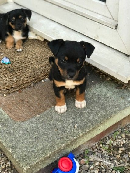 Pin On Puppies Looking For A New Home