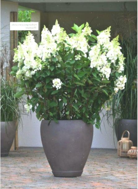 Asiaterrasse Xxl Pflanzen Balkonpflanzen Asiaterrasse Balconyplantsfence Balkon Balkony Pflanzen Xxl In 2020 Plants Asian Plants Potted Plants Patio