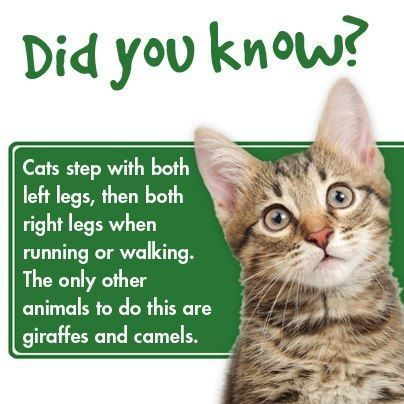 Pin By Petocart On Shirley Luke Other Cute Cats Cat Facts Science Cat Crazy Cats