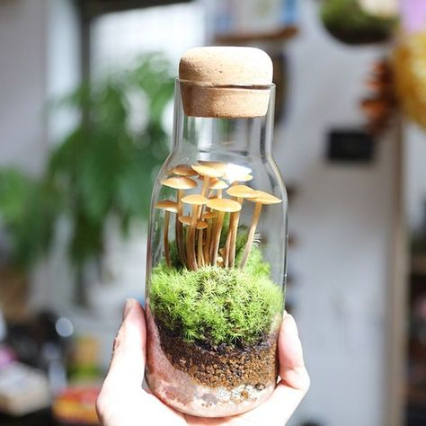 For the tiny places you discover (or make) that look like they could be a world of their own. Potted Plants, Garden Plants, Indoor Plants, Indoor Garden, Outdoor Gardens, Paludarium, Vivarium, Mini Terrarium, Moss Garden