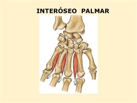Pin De Valkyrie En Tareas Anatomía Humana Anatomía Enfermeria