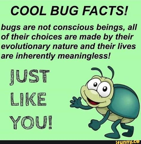 Cool Bug Facts Bugs Are Not Conscious