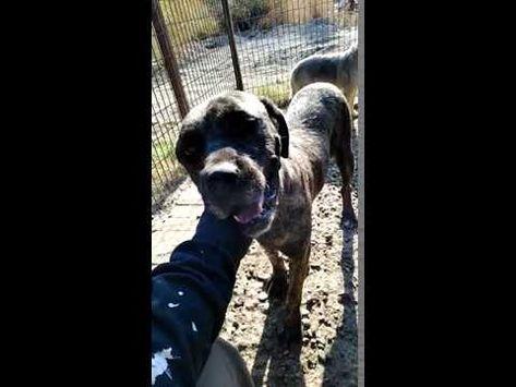Pin Von Elke Auf Missing Please Help Lost And Found Pets Tierheim Tiere Und Tiere Suchen Ein Zuhause