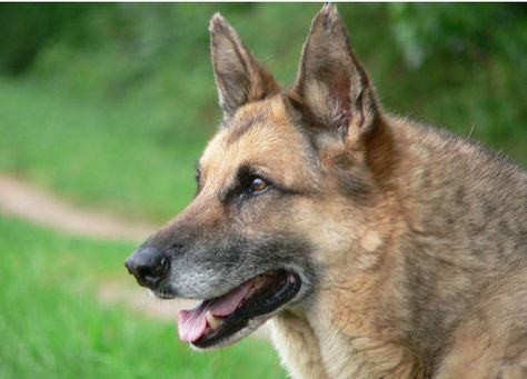 Akc Names Most Popular Dogs In U S Dogs Dog Died Dog Breeds