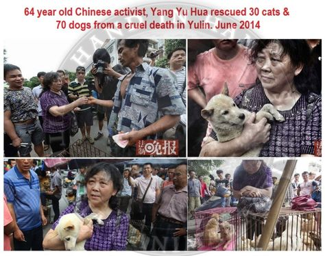 China More Dogs And Cats Rescued From Yulin 2014 Animal