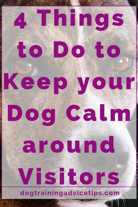 4 Things to Do to Keep your Dog Calm around Visitors - Dog Training Advice Tips