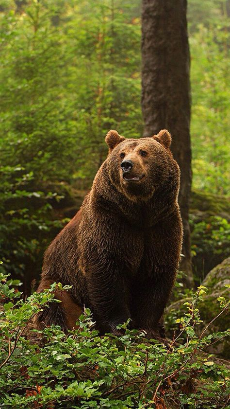 """Behold .. season of Spring .. thus season of Bear comes .. it is good to welcome both on their terms .. so girl quit your crying . it's a sign of the times......   DER TRAUM VON LEBENSABEND - lebensabendvision.de - Wer kennt einen netten älteren Menschen für eine """"exklusive 2-er-Lebensabendgemeinschaft alt + jung""""? Schauen Sie mein VIDEO auf meiner Homepage *** lebensabendvision.de *** #tiere #voegel #raubtiere #natur #wildtiere #zoo #safari #echsen #schlangen #saeugetiere #fische #insekten"""