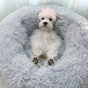 Comfy Calming Dog Cat Bed Dog Pet Beds Dog Bed Cat Bed
