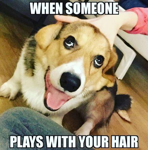 Watch The Best Youtube Videos Online Doggo Dog