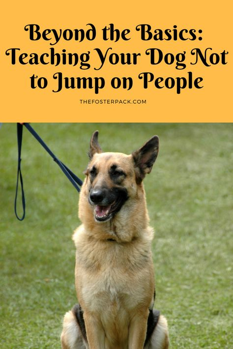 Beyond The Basics Teaching Your Dog Not To Jump On People Dog
